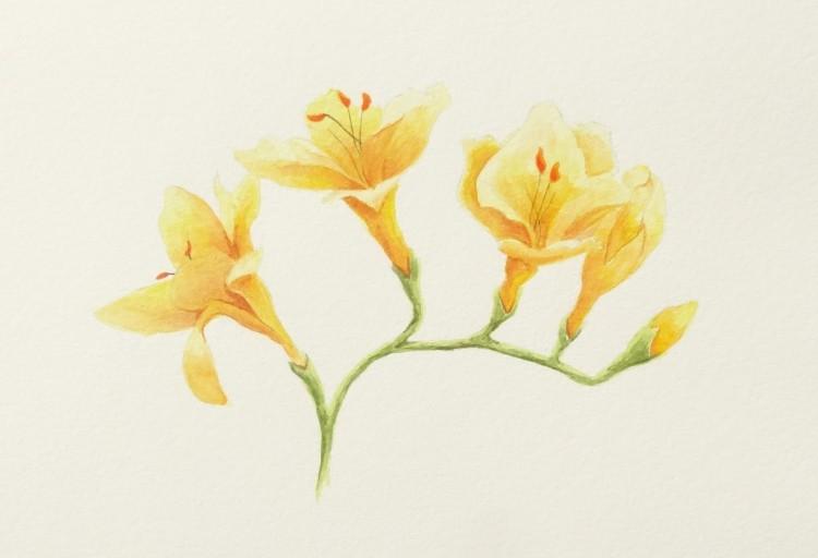 Yellow tender
